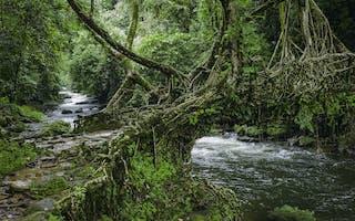 Living Root Bridge In Meghalaya