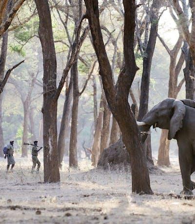 Lower Zambezi Walking Safari