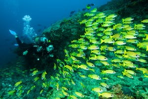 Machangulo  Diving  Fun
