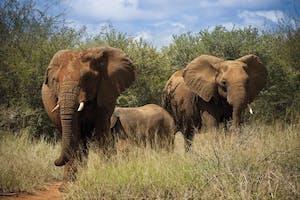 Madikwe Safari Lodge Game Drive