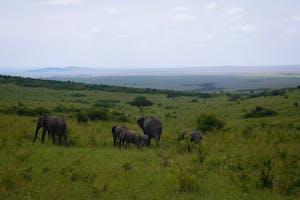 Masai  Mara View