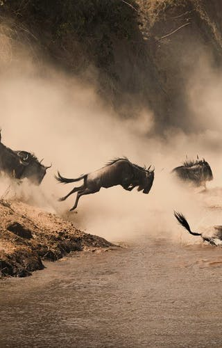 Masai Mara Wildebeest Migration Copy