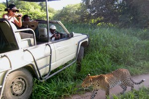 Mdonya  Old  River  Camp  Game  Drive