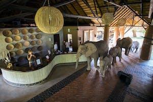 Mfuwe Lodge Elephants In Reception