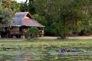 Mfuwe Lodge Wildlife
