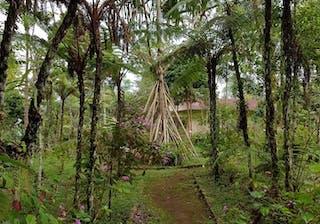 Michael Sao Tome – Bom Sucesso Botanical Gardens