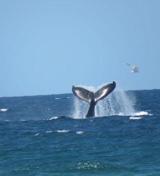 Mozambique Whale Viewing