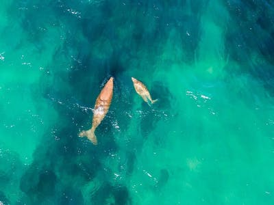 Mozambique Whale Watching From Above
