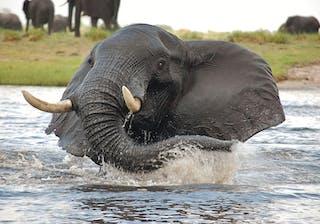 Muchenje Safari Lodge Elephant Splash