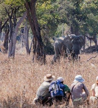 Mwaleshi Walking Safari