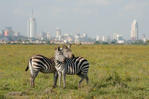 Nairobi National Park With City Skyline