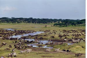 Ndutu  Safari  Lodge  Wildlife