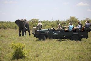 Ngala Safari Lodge Game Drive 1