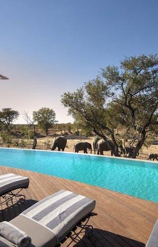 Ngala Safari Lodge Swimming Pool