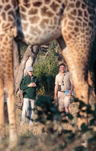 Nkonzi Walking Safari