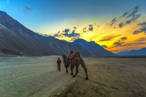 Nubra Valley Camel