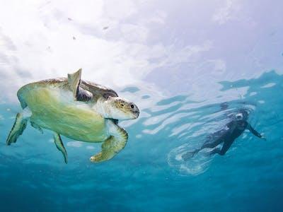 Ocean Safari Snorkelling In The Tofo Area Of Mozambique