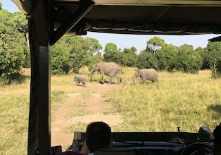 On Safari At Il Moran Elephants