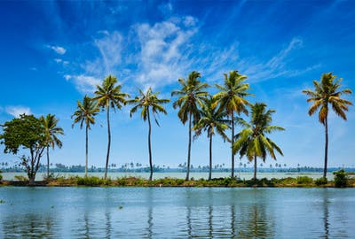 Palm Trees On The Kerala Backwaters