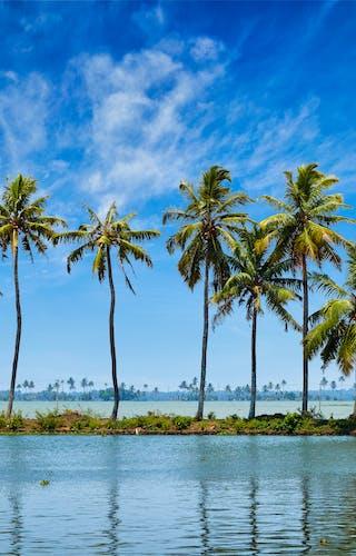 Palm Trees On The Kerala Backwaters