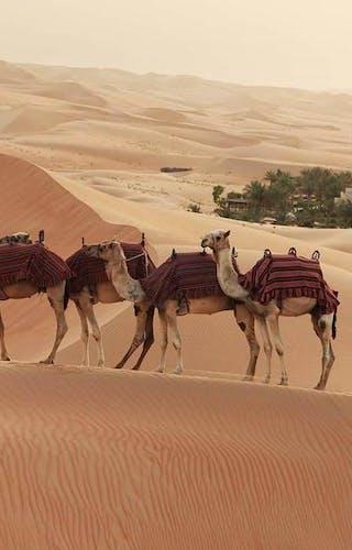 Qasr Al Sarab By Anantara Camels