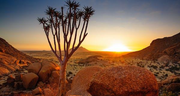 Quiver Tree Spitzkoppe Damaraland