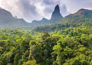 Rainforest And Peak  Sao  Tome  Principe