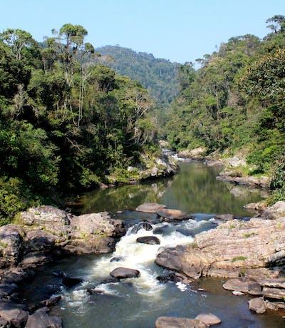 Ranomafana Park River