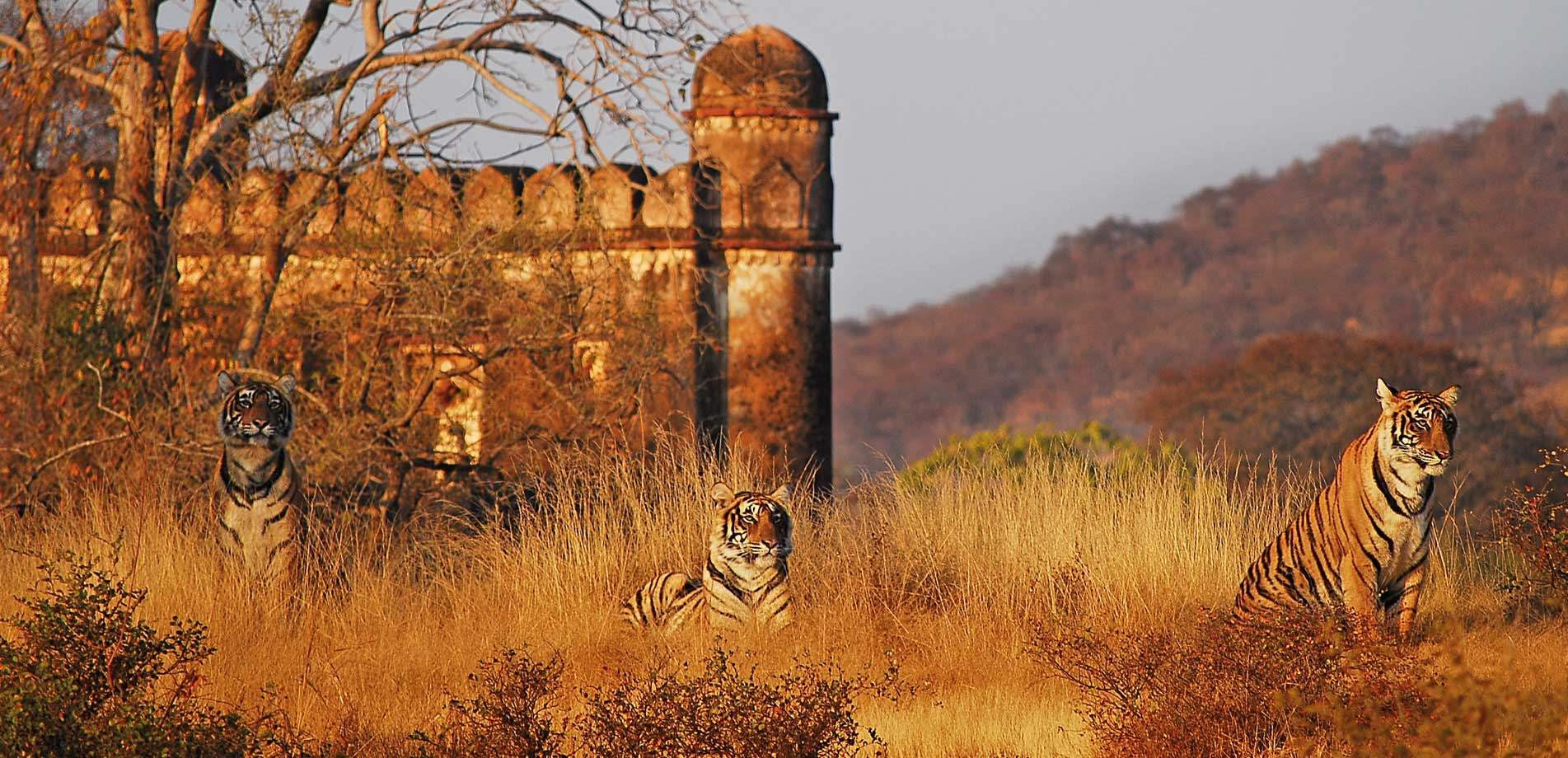 Ranthambore National Park Sher Bagh