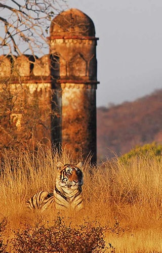 Ranthambore National Park Sher Bagh