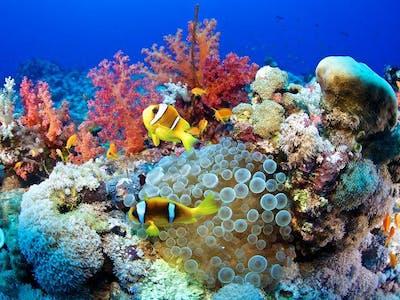 Reef Regenerated