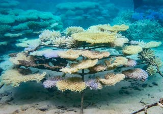Reefscape Project Regenerate Coral