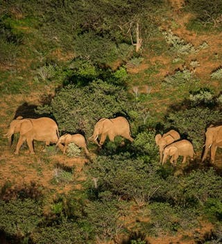 Retetie Elephants