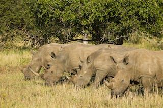 Rhino Ridge Rhino Conservation