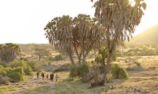 Rhino Tracking With Saruni In Sera Conservancy