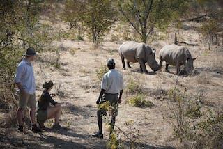 Rhino Bush Walk At Thorntree River Lodge