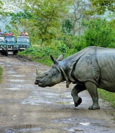 Rhino On Safari In Kaziranga