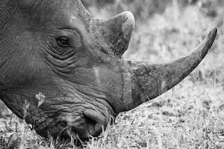 Rhino Wildlife Conservation