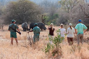 Rhinos In Damaraland