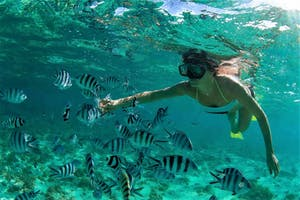 Snorkelling  Nr  Nosy  Be  Nos  Tourismoffice