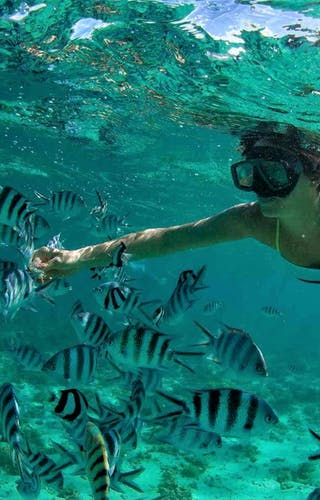 Snorkelling Near Nosy Be