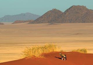 Sossusvlei Gemsbok On Red Dunes