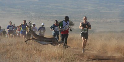 Wild Antelope Joins