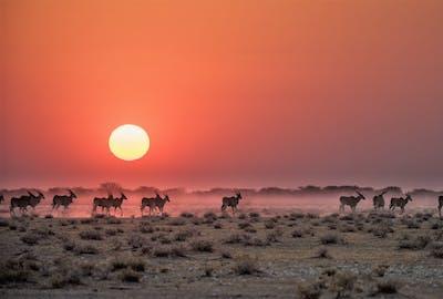 Safarihoek Namibia O Evana