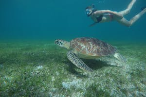 Sakatia  Lodge  Snorkeling  Turtle