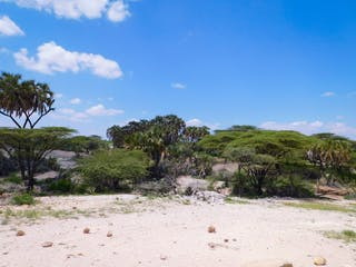 Samburu Vegetation