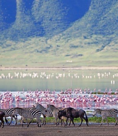 Sanctuary Ngorongoro Crater Camp Game Drive