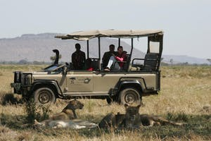 Saruni Mara Lions On A Game Drive