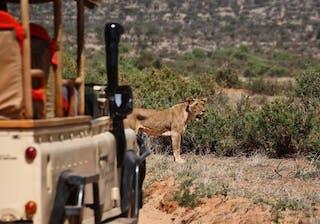 Saruni Samburu Game Drive