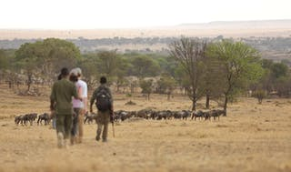 Sayari Camp Wildebeest